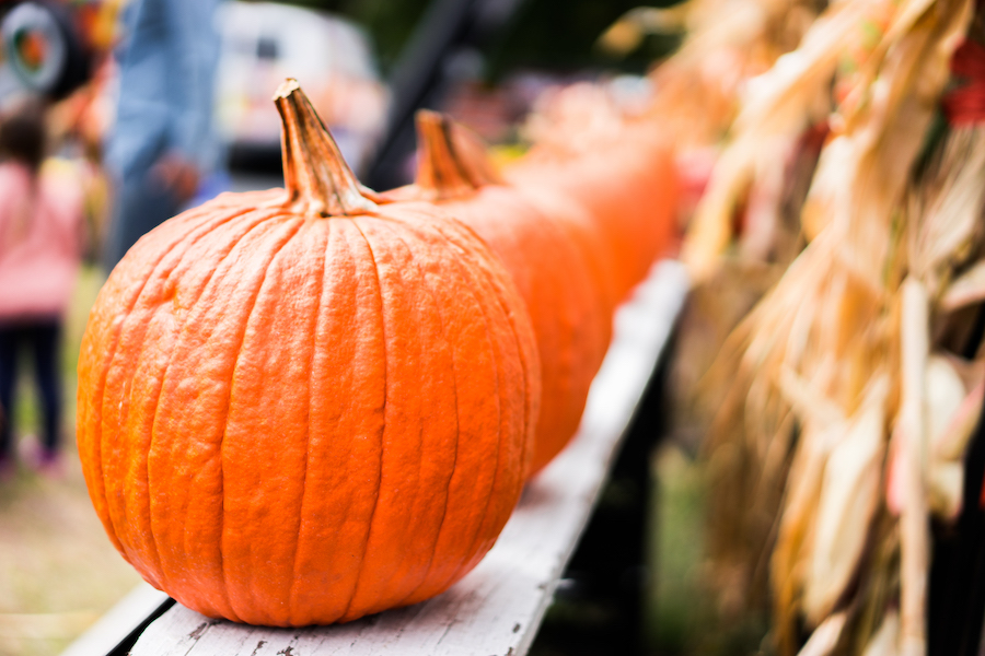 raleigh-pumpkin-patches-and-corn-mazes